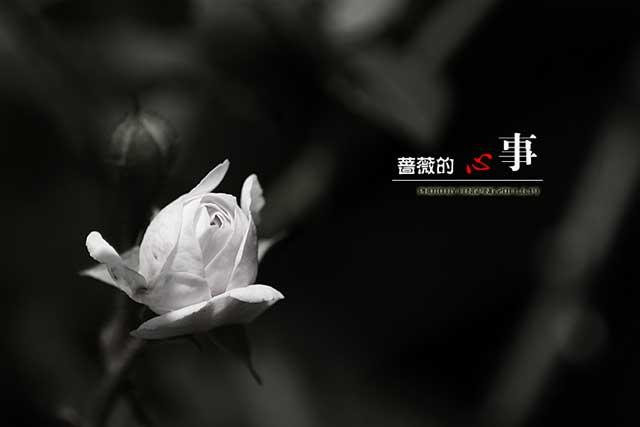 蔷薇的心事