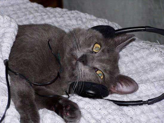 一只猫咪正在认真听音乐
