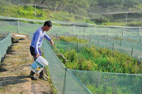 农村人很勤劳