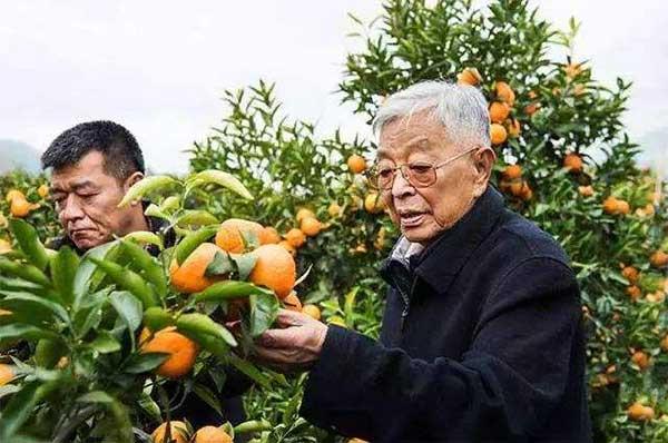 禇时健和他的禇橙