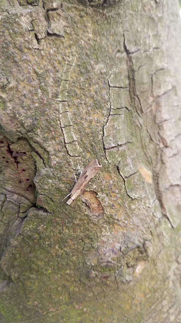 偶然见到的树皮虫