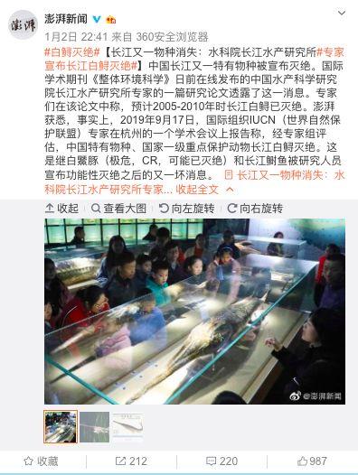 长江白鲟灭绝