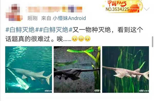长江白鲟灭绝,网友评论:听闻已是永别
