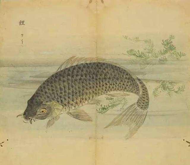 《小雅•鹿鸣之什•鱼丽》诗经鉴赏及译文