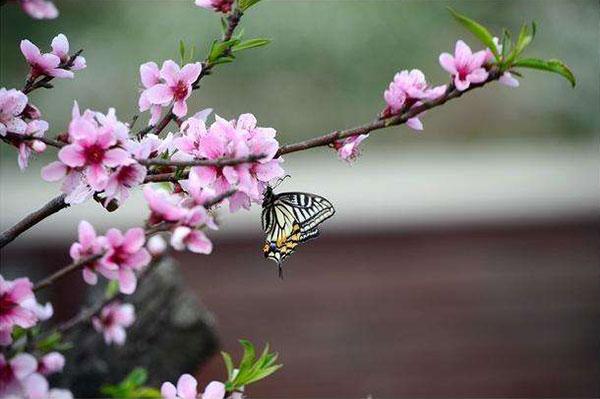 生肖属猴、鼠、龙的人,在这个秋天里面的桃花运旺