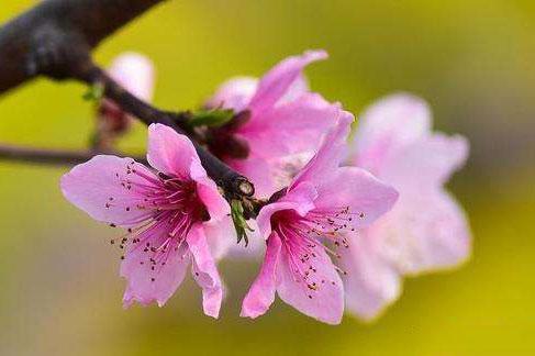 在这个秋天里面,哪些人的桃花运最旺呢?