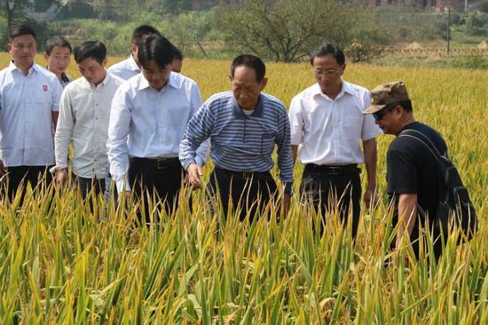 袁隆平和杂交水稻