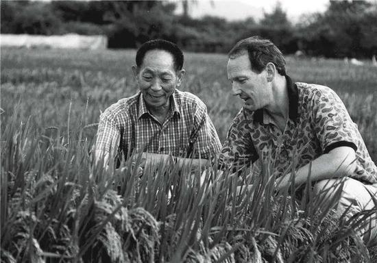 """中国""""杂交水稻之父""""袁隆平和美国水稻专家一起研究超级杂交水稻(视觉中国供图)"""