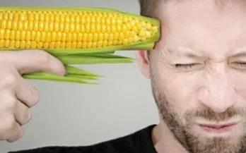 """转基因作物与非转基因作物能否""""共存""""?"""
