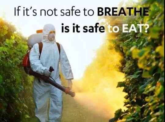 导致转基因作物除草剂用量增加的主要原因是抗草甘膦的超级杂草迅速蔓延