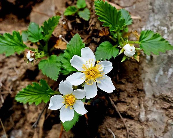 把你栽种在哪里,就在哪里开花