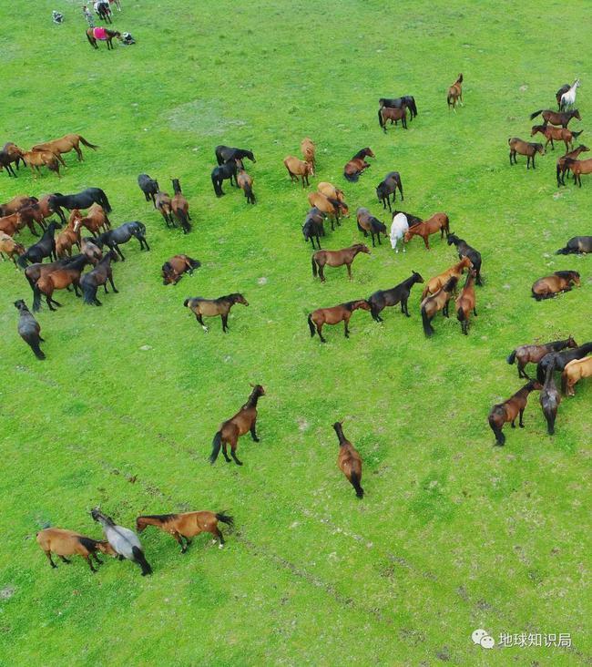 这里还成就了亚洲最大的军马场——山丹军马场