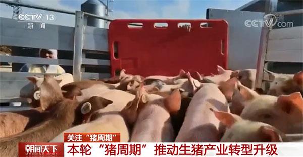 去年年底生猪养殖的规模化率达到了57.1%